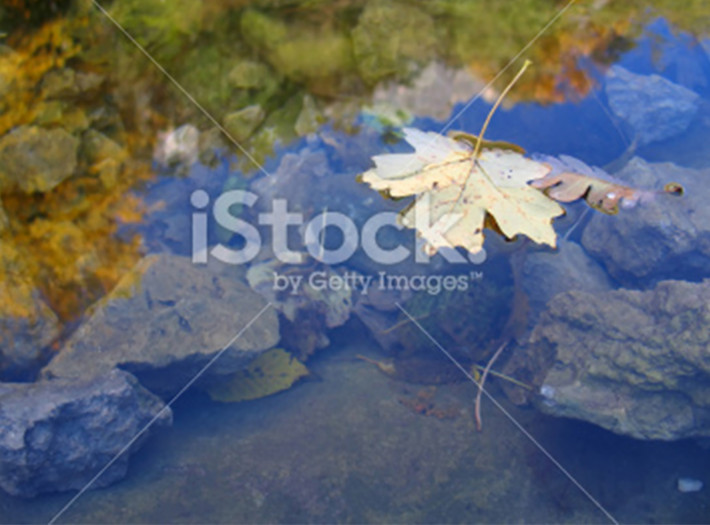 leaves-placeholder